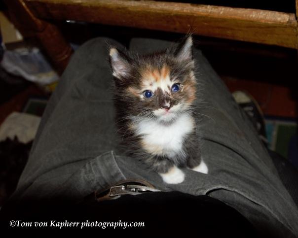 Kittens by ©Tom von Kapherr photography.com